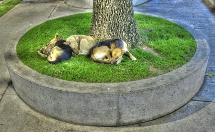 perros_cimarrones04